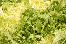 Free Lettuce Leaves - Vegetarian Background Stock Photo - 4211720