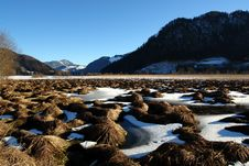 Winter Bog In Mountains. Royalty Free Stock Photo