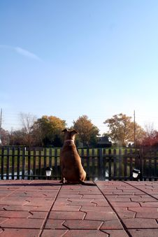 Free Dog On Patio Royalty Free Stock Photos - 4212398