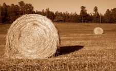 Free Bales Of Hay Royalty Free Stock Photography - 4213947