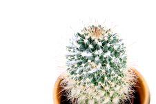 Free Cactus Royalty Free Stock Image - 4214236