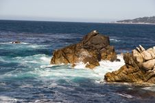 Point Lobos Stock Photos