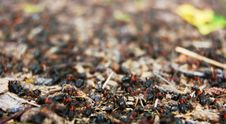 Free Anthill Of Close-up Stock Image - 4215711