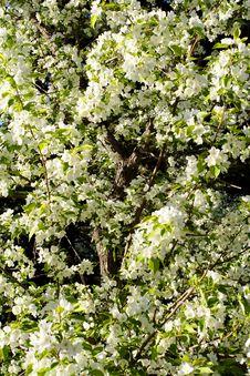 Free Blossom Stock Photo - 4216610