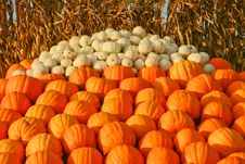 Free A Mound Of Pumpkins Ready To Buy Royalty Free Stock Photos - 4217428