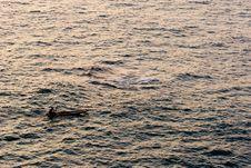 Free Ocean Sunset Stock Photography - 4217702