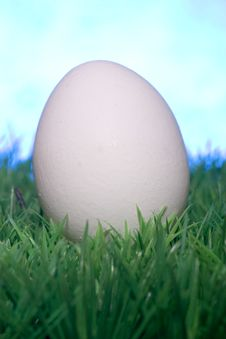 Free White Egg Stock Photo - 4217910