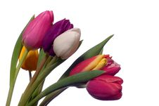 Free Colorful Tulips Royalty Free Stock Image - 4217916