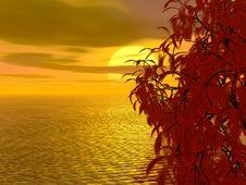 Free Beautiful Sunset Stock Photo - 4218740