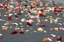 Free Rose Petals Royalty Free Stock Images - 4218829