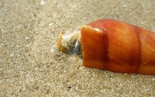 Free Marine Life Detail Stock Images - 4219654