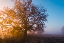 Free Autumn Landscape, Trees In The Mist At Dawn Stock Photography - 42130452