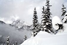 Free Snow Covered Evergreens Royalty Free Stock Image - 4220876