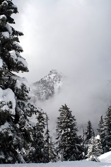 Free Snow Covered Evergreens Royalty Free Stock Photography - 4220887