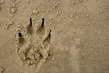 Free Dog Print In Sand Royalty Free Stock Image - 4222256