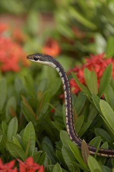 Free Snake On Bush Royalty Free Stock Images - 4223009