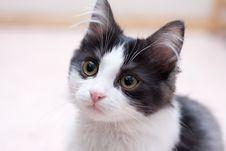 Free Cat Stock Image - 4223031