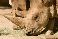 Free White Rhinoceros Stock Photo - 4225850