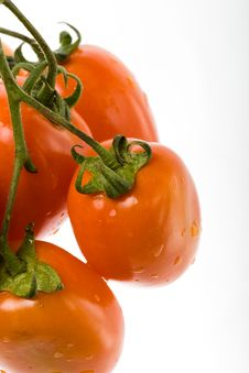 Branch Of Red Tomato Isolated Stock Image