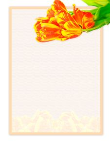 Free Paper With Tulips Stock Photo - 4228450