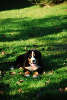 Free Dog In The Garden Royalty Free Stock Image - 4229346