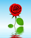 Free Roses For Great Celebrations Stock Photo - 4237290