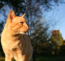 Free An Orange Kitten Dreaming On A Sunny Morning Royalty Free Stock Photos - 4232248