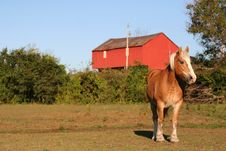 A Horse Standing In An Open Pasture Royalty Free Stock Photography