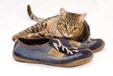 Free A Cat Stock Image - 4233431