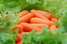 Free Mini Carrots And Lettuce Stock Photography - 4235952