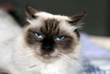 Free Kitten3 Stock Photo - 4236770
