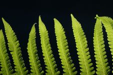 Free Green Fern Stock Image - 4237271