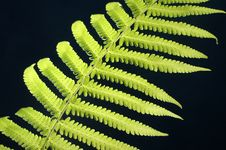 Free Green Fern Stock Photography - 4237272