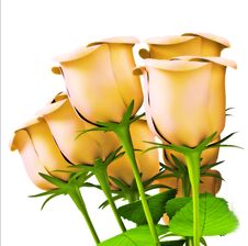 Free Roses For Great Celebrations Royalty Free Stock Image - 4237516