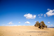 Free Maspalomas Sand Dunes Royalty Free Stock Photos - 4239418