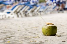 Free Coconut Stock Photography - 4239522