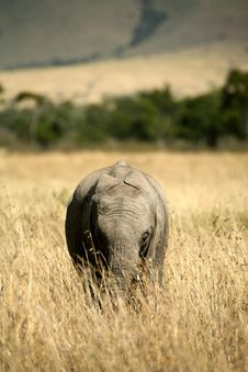 Free Baby Elephant Walking Through The Grass Stock Photo - 4239980