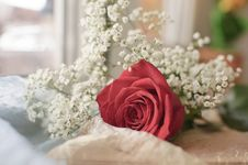Free Red Rose And White Flowers Stock Photography - 42347802