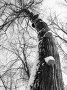 Free Power Old Tree Royalty Free Stock Photo - 4240865