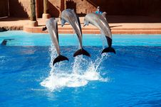 Dolphin Jumping Royalty Free Stock Photos