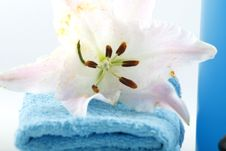 Free Towels Stock Photography - 4240432