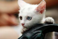 Free Cat Stock Image - 4240691