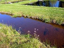 Free Brook In The Meadow Royalty Free Stock Photo - 4241375
