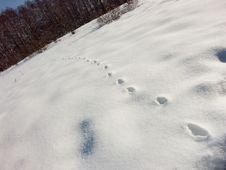 Tracks On The Snow Stock Image