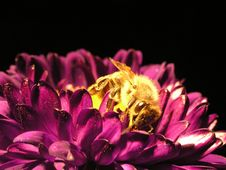Free Bee Stock Images - 4243544
