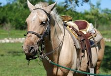 The Horse Portrait Stock Image