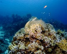 Free Corals Of The Red Sea Stock Photos - 4246163