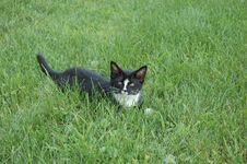 Free Kitty Stock Image - 4246271