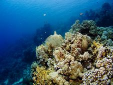 Free Corals Of The Red Sea Royalty Free Stock Image - 4246796