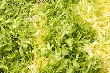 Free Lettuce Leaves - Vegetarian Background Royalty Free Stock Photos - 4246978